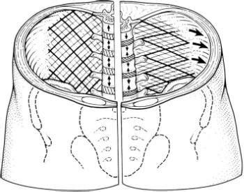 strengthening transverse abdominis  pitfalls   core