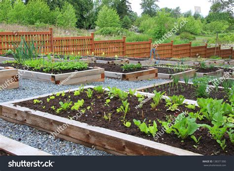 vegetable boxes for the garden community vegetable garden boxes stock photo 138371300