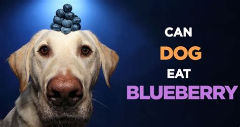 can dogs eat berries can dogs eat bananas apples strawberries oranges etc