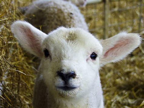 goats milk for dogs gaga for goat s milk dogsplendor