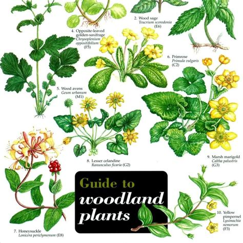 Flowering House Plants Identification woodland plants peoples trust for endangered species