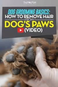How To Remove Pet Hair From by How To Remove Hair From Paws Why You Must Do