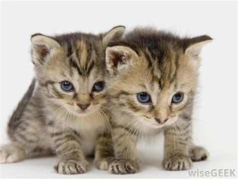 Cutest Cats Pet Pet Pet Product 4 by Looking For A Pet Some Of The Cutest Pets Tipit