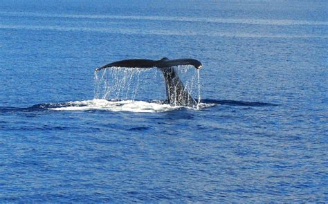 kauai boat tours in december exclusive whale watching tour west side kauai vacation