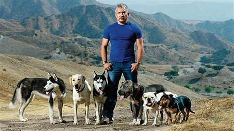 cesar millan s lessons from the pack stories of the dogs who changed my books rescuing cesar millan s journal
