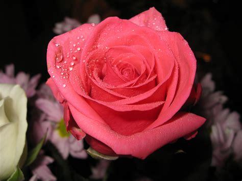 imagenes todo flores banco de im 225 genes para ver disfrutar y compartir