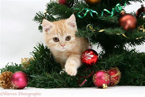 christmas train around tree home decorating interior