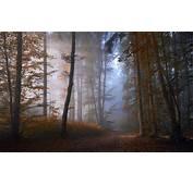 Nature Forest Landscape Mist Path Leaves Sunrise