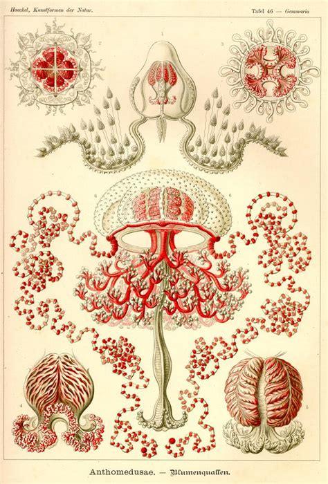libro art forms in nature 生物学者エルンスト ヘッケルが100年以上前に描いた芸術的に美しい生物イラスト集 kunstformen der natur dna