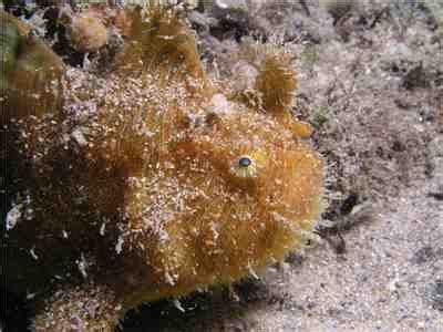 Sleepsuit Blue Stripe Octopus Turn Me Around michael mcfadyen s scuba diving web site