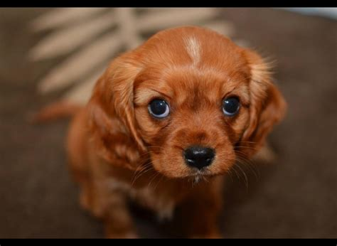 cutest puppies on earth 35 of the most cutest puppies on earth yummypets