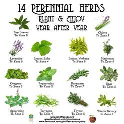 herb garden plants 14 perineal herbs to plant every year gardening canning