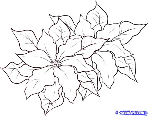 printable instructions for drawing flowers how to draw poinsettias step by step flowers pop