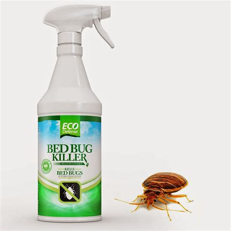 bed bug defense welcome to daisy s reviews bed bug killer by eco defense