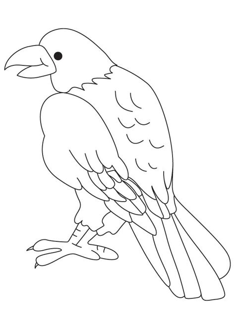 Free Coloring Pages Of Birds Of Prey Birds Of Prey Coloring Pages