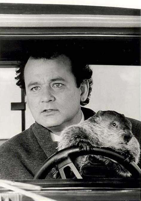 groundhog day with bill murray bill murray groundhog day s photos