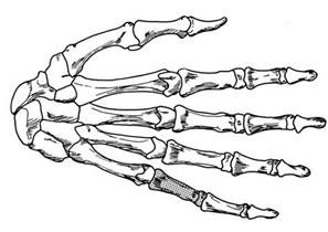 Free Coloring Pages Of Bones Of The Hand Bone Coloring Page
