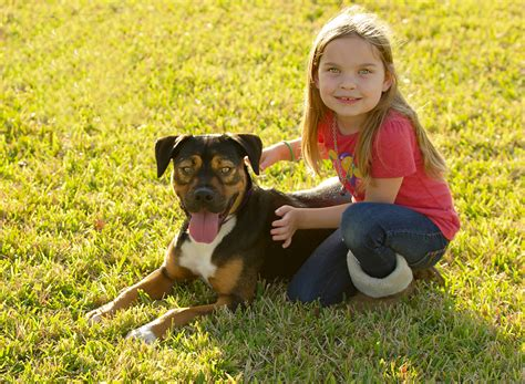 southern states rottweiler rescue southern states rescued rottweilers