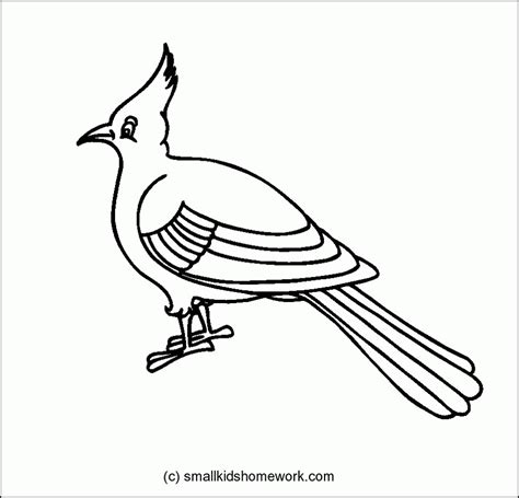 rainbow crow coloring page outline of bird coloring home