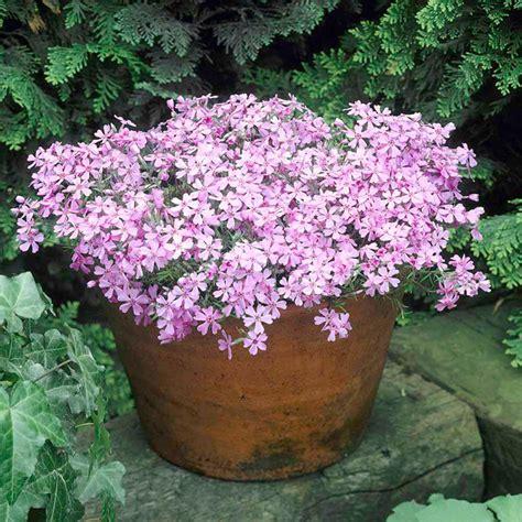 alpine plants collection dobies