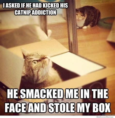 cat and memes cat memes