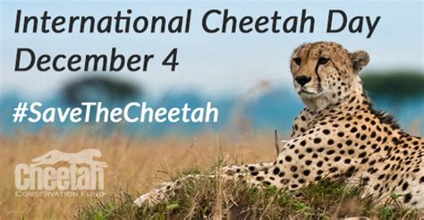 freeda the cheetah books international cheetah day