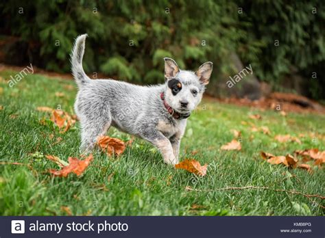 Jo In Pet Comb Comb Row Intl acd stock photos acd stock images alamy