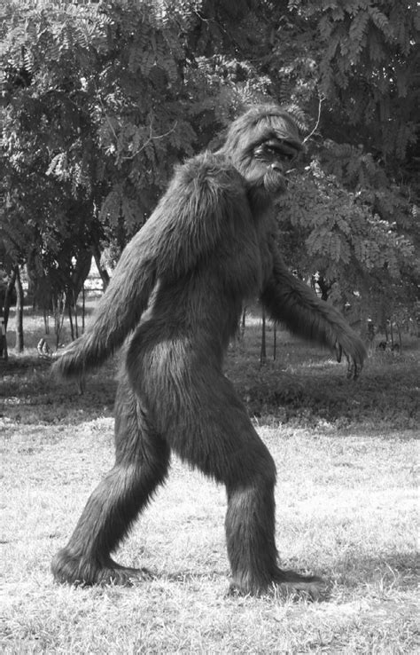 the of bigfoot maine s confirmed bigfoot sighting takes place in a