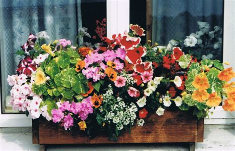 flowers window boxes my peace at home