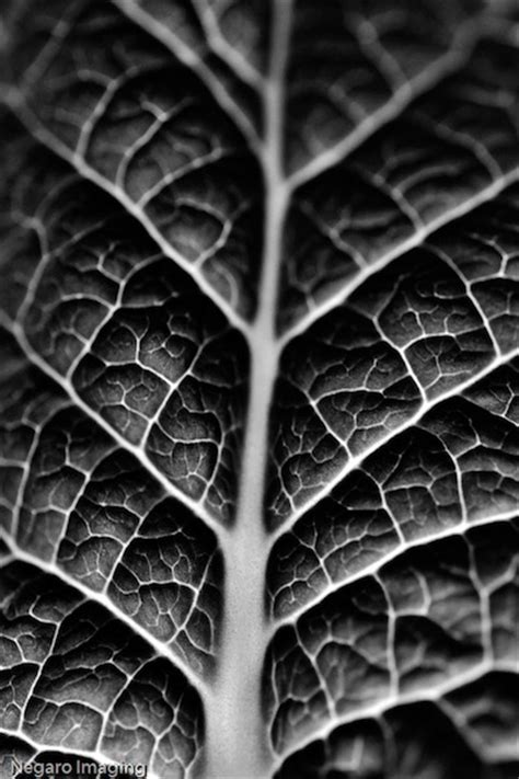 leaves pattern photography 3 ways to search for interesting textures