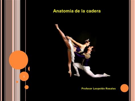anatomia de la cadera anatom 237 a de la cadera