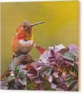 real hummingbird feathers for sale rufous your feathers greeting card for sale by dao