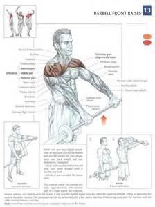 Shoulder Pain Incline Bench 33 Best Front Delts Training Images On Pinterest Fitness