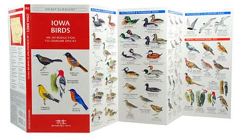 birds of iowa field guide iowa bird identification and