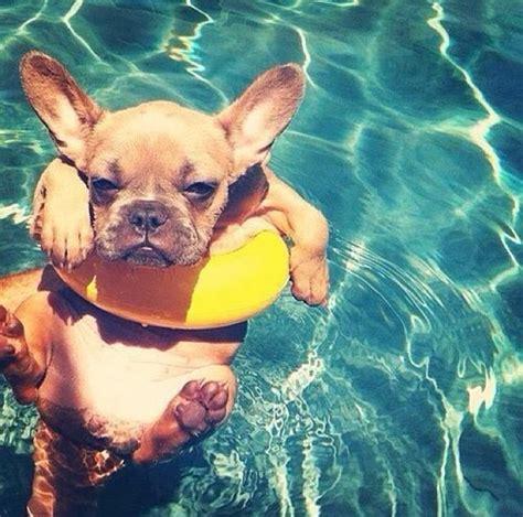 compagnie aeree accettano cani in cabina tutto quello devi sapere prima di portare il tuo
