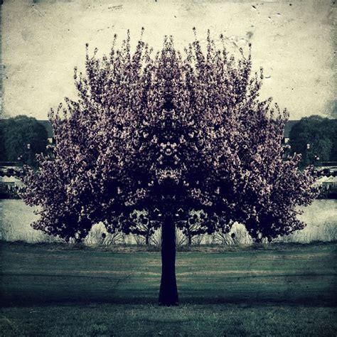 vintage tree tree vintage