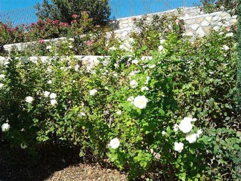 El Paso Municipal Garden by Popular Attractions In El Paso Tripadvisor