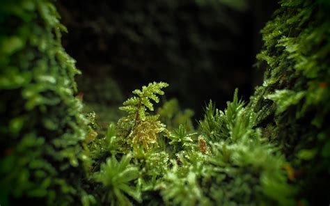 daily wallpaper macro moss    waste  time