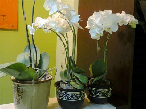 Tanaman Sintetik Plastik Dekorasi Aquarium Tanaman 8 tanaman hias indor tanaman dalam ruangan tanaman dalam