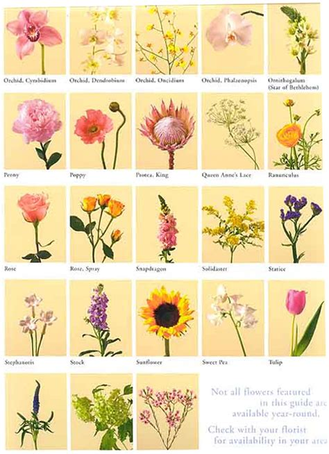 list of flowers the gallery for gt types of flowers with names and meanings