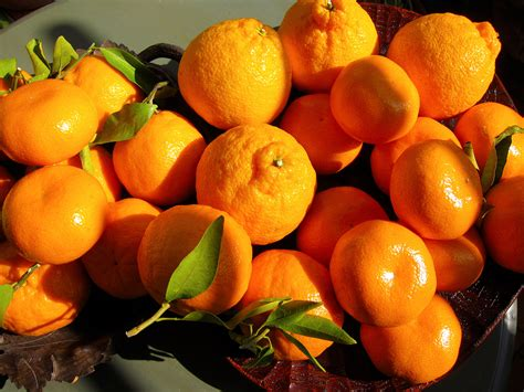 turkish sector of fresh fruit and vegetables citrus