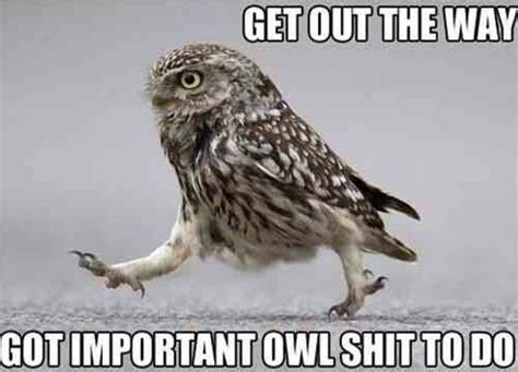 Meme Owl - love this owl meme laugh it off pinterest love