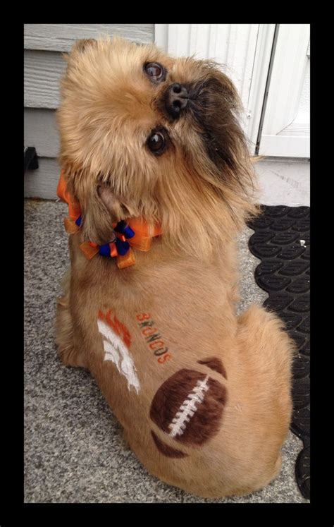 grooming denver repinned creative grooming bowl ready broncos fans creative