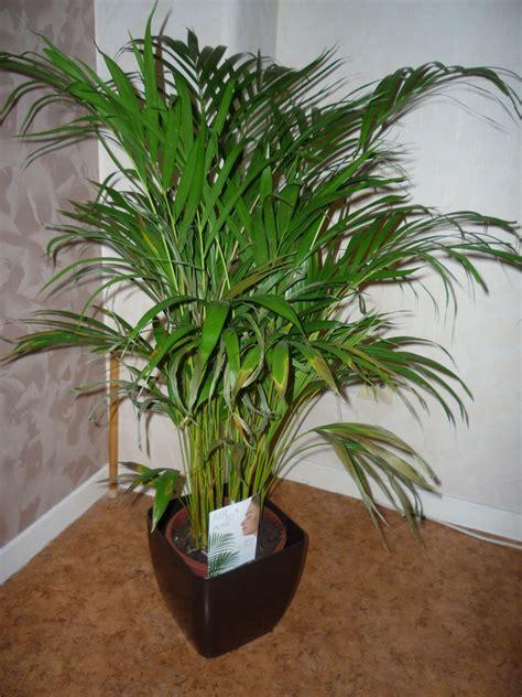 Plante Verte Yucca by Yuka Plante Verte L Atelier Des Fleurs