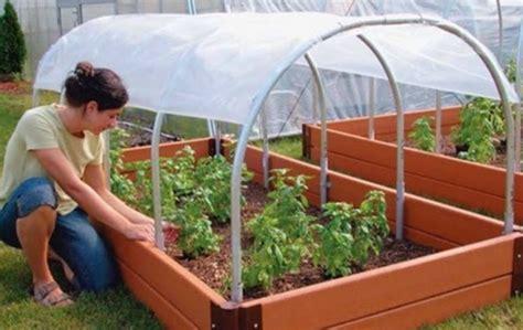 membuat rumah hamster di dalam tanah cara budidaya sayuran organik di polybag dan tanah