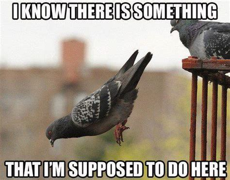 Crazy Bird Meme - most funny animal memes and humor pics quotes and humor