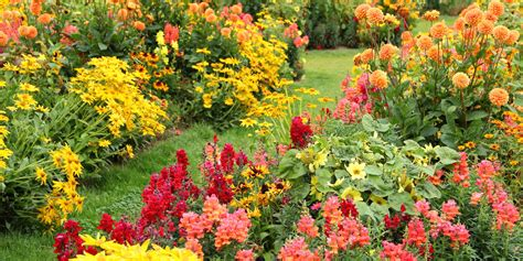 25 Best Fall Flowers Plants Flowers That Bloom In Autumn Fall Flower Garden