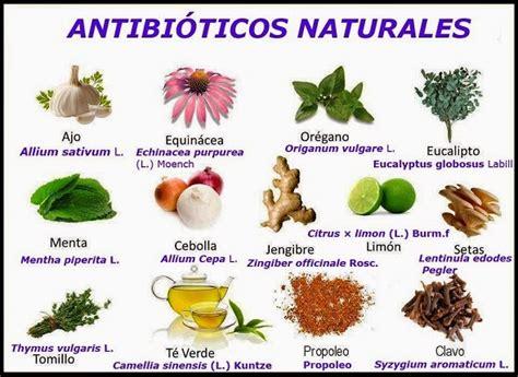 remedios caseros y naturales para la sinusitis mis inma 161 consejos naturales antibi 211 ticos naturales