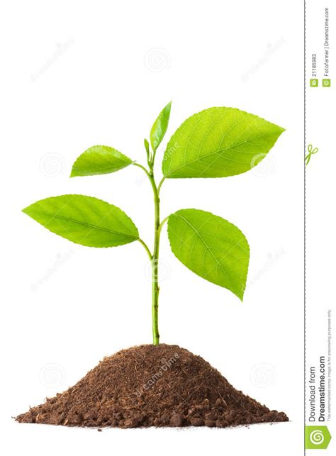 small plant newborn small green plant stock photos image 21185983