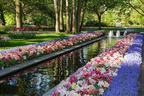 parco fiori olanda olanda i tulipani ed il parco di keukenhof caldana